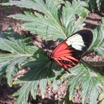 butterfly-world0037
