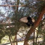 butterfly-world0038