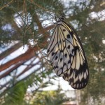 butterfly-world0040