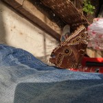 butterfly-world0088
