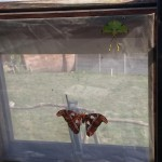 butterfly-world0095