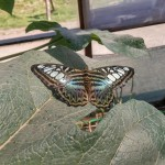butterfly-world0096