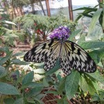 butterfly-world0119