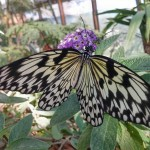 butterfly-world0120