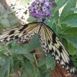 butterfly-world0121