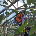 butterfly-world0123