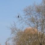 fairlands-valley-stevenage24